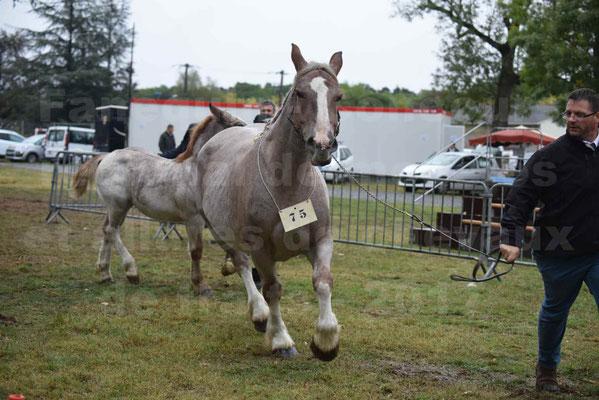 Concours Régional de chevaux de traits en 2017 - Jument & Poulain Trait BRETON - BELLE DOUS MOULIS - 20