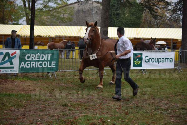 Concours Régional de chevaux de traits en 2017 - Pouliche Trait BRETON - ECLIPSE 53 - 04