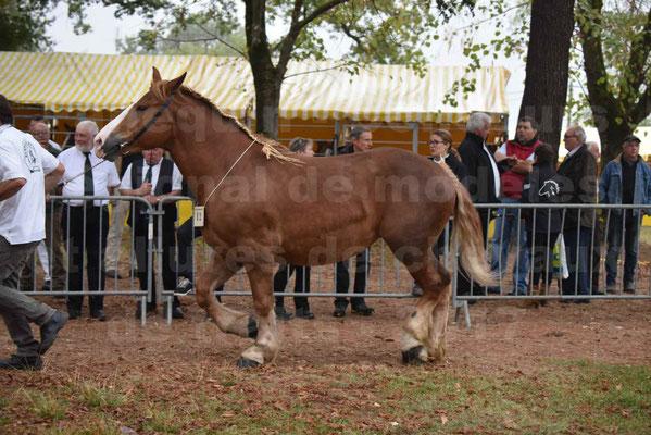 Concours Régional de chevaux de traits en 2017 - Trait BRETON - FLICKA 26 - 21