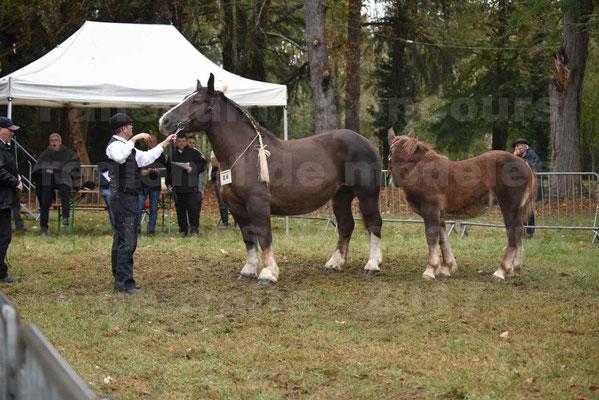 Concours Régional de chevaux de traits en 2017 - Jument & Poulain Trait BRETON - DIANE 18 - 17