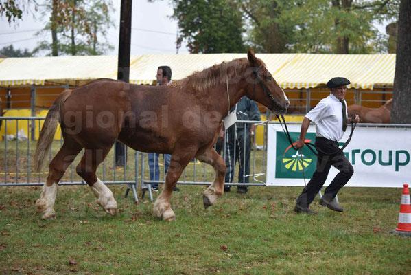 Concours Régional de chevaux de traits en 2017 - Trait BRETON - FIBULE DU VERDUS - 12