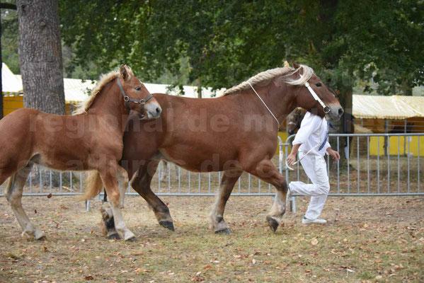 Concours Régional de chevaux de traits en 2017 - Jument & Poulain Trait COMTOIS - CHIPPIE 2 - 19