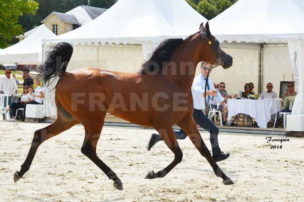 Championnat de FRANCE de chevaux Arabes à Pompadour en 2018 - LAZEEZ AL SHAHANIA - 04