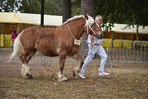 Concours Régional de chevaux de traits en 2017 - Jument & Poulain COMTOIS - BAILLA DU CLOS - 19