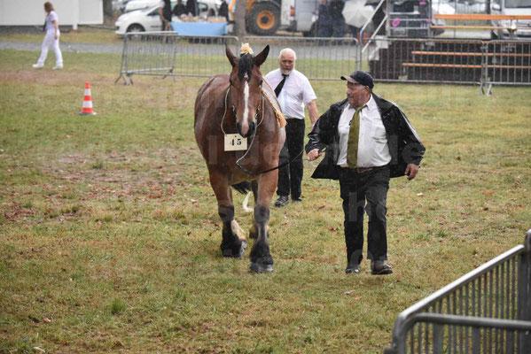 Concours Régional de chevaux de traits en 2017 - Trait BRETON  - EGLANTINE DE BENECHE - 22