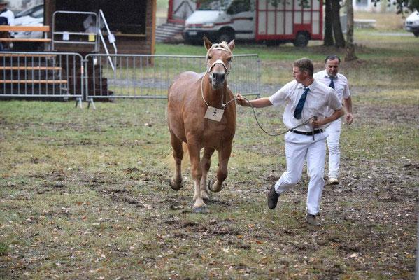 Concours Régional de chevaux de traits en 2017 - Trait COMTOIS - FLOIRIDE 2 - 3