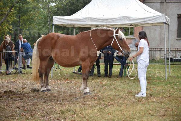 Concours Régional de chevaux de traits en 2017 - Jument & Poulain Trait COMTOIS - DAKOTA DU GARRIC - 05
