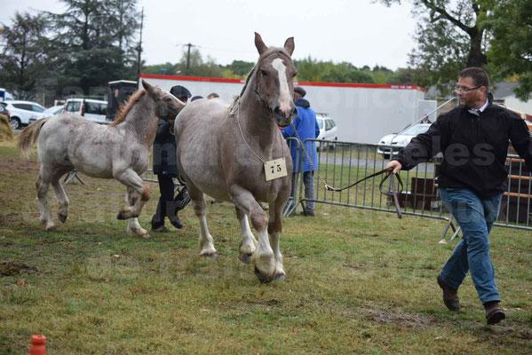 Concours Régional de chevaux de traits en 2017 - Jument & Poulain Trait BRETON - BELLE DOUS MOULIS - 18