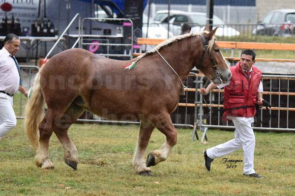 Concours Régional de chevaux de traits en 2017 - Trait ARDENNAIS - FLEUR D'ARIES - 03