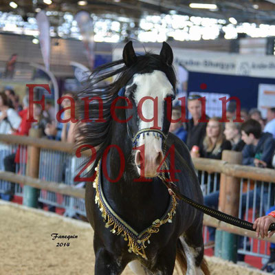 EQUITA-LYON 2014 - Présentation chevaux arabes de couleurs - 3