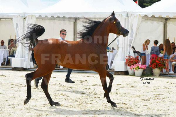 Championnat de FRANCE de chevaux Arabes à Pompadour en 2018 - LAZEEZ AL SHAHANIA - 06