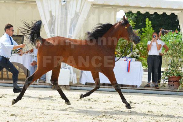 Championnat de FRANCE de chevaux Arabes à Pompadour en 2018 - LAZEEZ AL SHAHANIA - 18