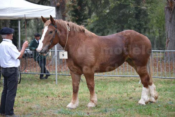 Concours Régional de chevaux de traits en 2017 - Trait BRETON - FIBULE DU VERDUS - 05