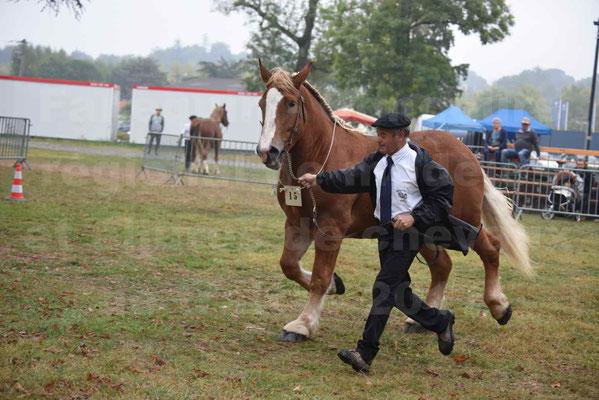 Concours Régional de chevaux de traits en 2017 - Trait BRETON - FLO DE LA MARGUE - 22