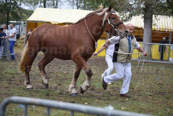 Concours Régional de chevaux de traits en 2017 - Trait COMTOIS - ERANIE DES RAYNAUDS - 20