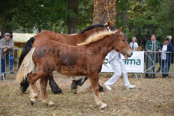 Concours Régional de chevaux de traits en 2017 - Jument & Poulain Trait COMTOIS - COMETE DE GRILLOLES - 43