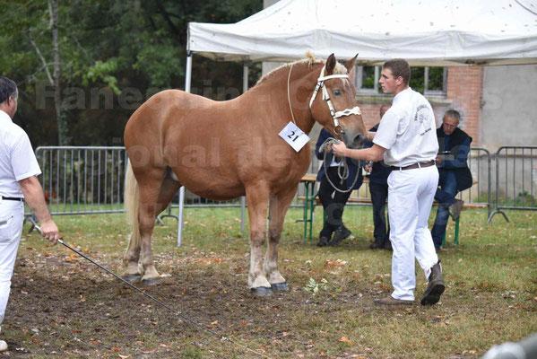Concours Régional de chevaux de traits en 2017 - Pouliche Trait COMTOIS - EGLANTINE 28 - 27