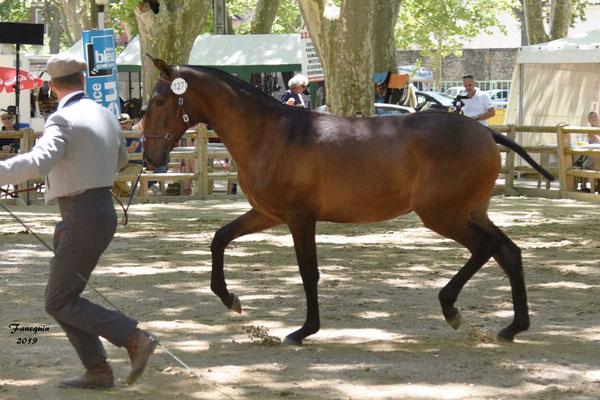 Championnat de France de chevaux LUSITANIENS à Beaucaire - 3