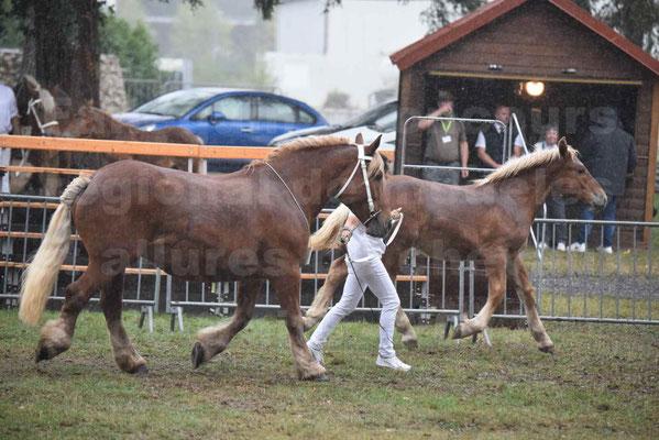 Concours Régional de chevaux de traits en 2017 - Trait COMTOIS - Jument suitée - ROXIE 7 - 04
