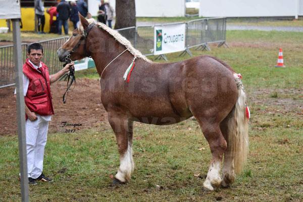 Concours Régional de chevaux de traits en 2017 - Trait ARDENNAIS - FLEUR D'ARIES - 01