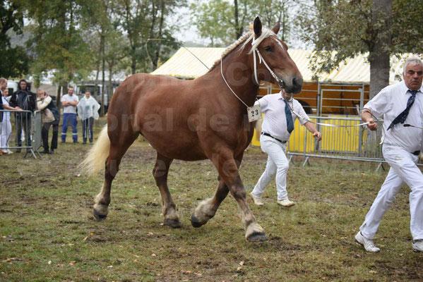 Concours Régional de chevaux de traits en 2017 - Trait COMTOIS - ELLIA DE FENEYROLS - 31