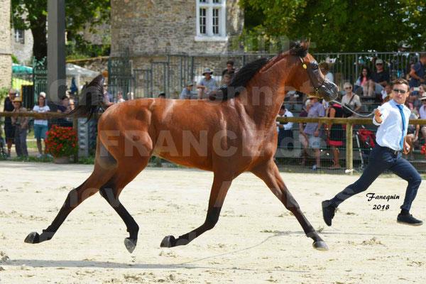 Championnat de FRANCE de chevaux Arabes à Pompadour en 2018 - LAZEEZ AL SHAHANIA - 14