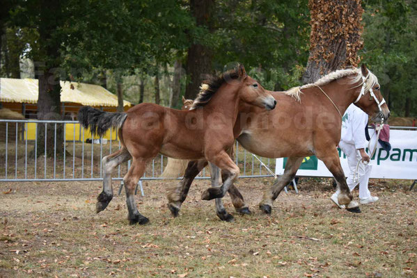 Concours Régional de chevaux de traits en 2017 - Jument & Poulain Trait COMTOIS - DIEZE DE GRILLOLES - 19