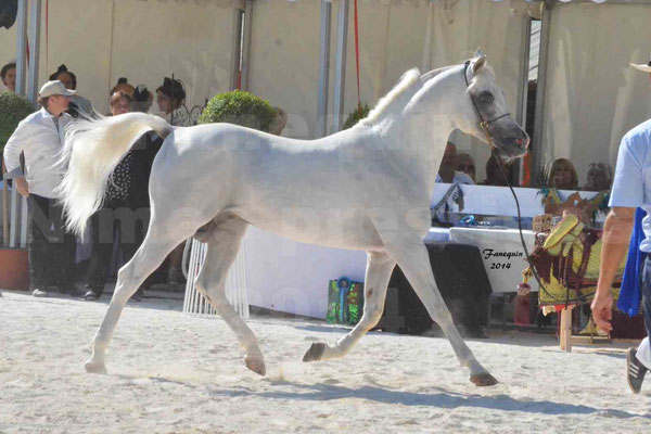Concours national de Nîmes 2014 - ESTA ESPLANAN - Notre Sélection - 11