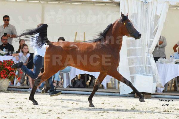 Championnat de FRANCE de chevaux Arabes à Pompadour en 2018 - LAZEEZ AL SHAHANIA - 02