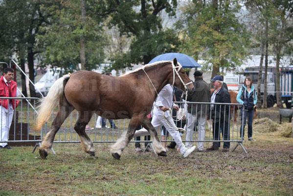 Concours Régional de chevaux de traits en 2017 - Jument & Poulain Trait COMTOIS - BESMA DE GRILLOLES - 19