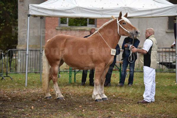 Concours Régional de chevaux de traits en 2017 - Trait COMTOIS - ELLA DE BELLER - 6