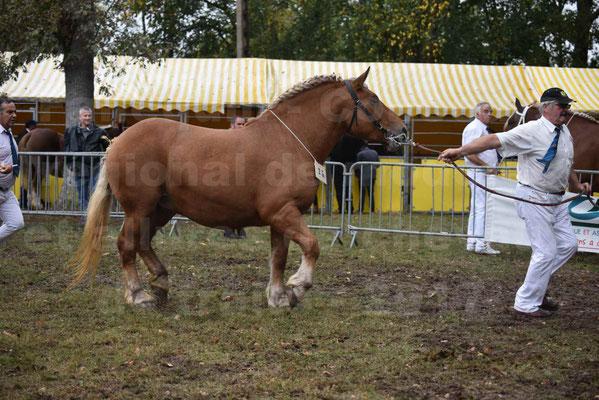 Concours Régional de chevaux de traits en 2017 - Trait COMTOIS  - EGLANTINE DE BENS - 14