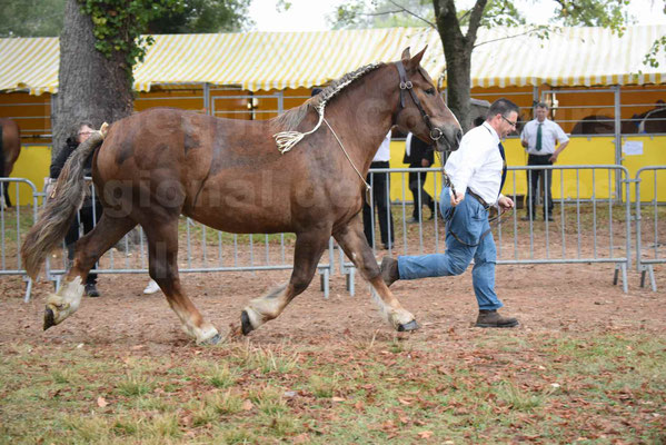 Concours Régional de chevaux de traits en 2017 - Trait BRETON - FINNE DE SAND - 05