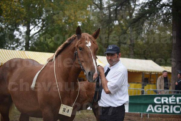 Concours Régional de chevaux de traits en 2017 - Jument Suitée - Trait BRETON - BEGONIA - 1