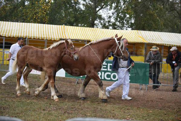 Concours Régional de chevaux de traits en 2017 - Jument Suitée - Trait COMTOIS - TOSCANE DE GIOUX - 02