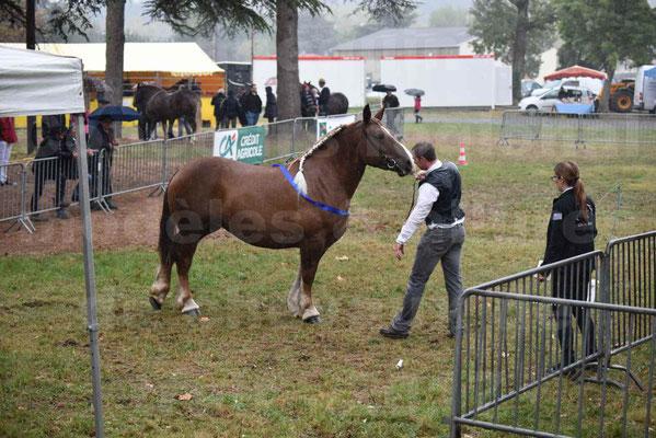 Concours Régional de chevaux de traits en 2017 - Pouliche trait BRETON - EPINE DE TELLEN - 03