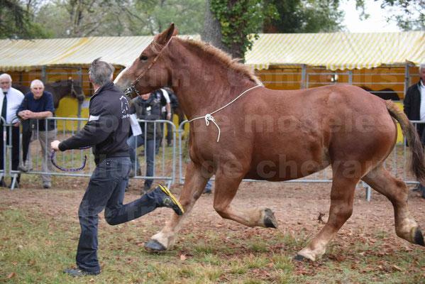Concours Régional de chevaux de traits en 2017 - Pouliche Trait BRETON - EDEN DE LA GAUGE - 32