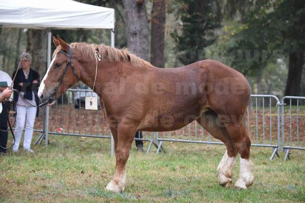 Concours Régional de chevaux de traits en 2017 - Trait BRETON - FIBULE DU VERDUS - 07
