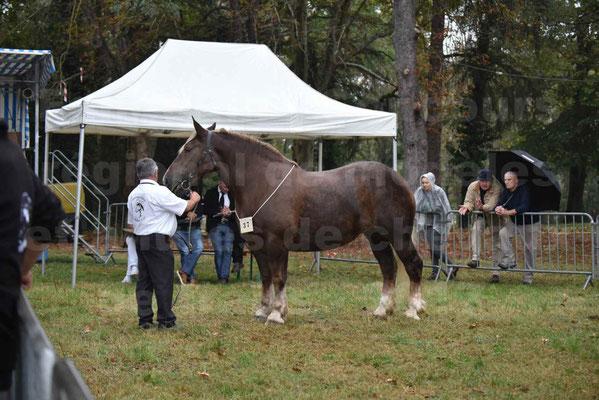 Concours Régional de chevaux de traits en 2017 - Trait BRETON - ELENNE DE TOU FOLL - 06
