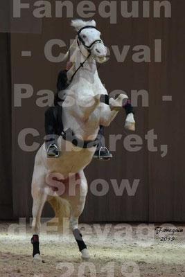 Cheval Passion 2019 - Show des races - CHEVAUX CREME