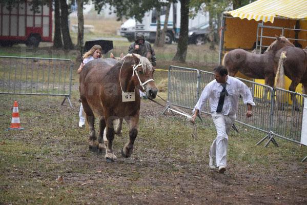 Concours Régional de chevaux de traits en 2017 - Trait COMTOIS - Jument suitée - RITA 38 - 10