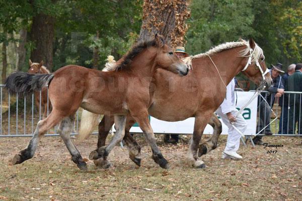 Concours Régional de chevaux de traits en 2017 - Jument & Poulain Trait COMTOIS - DIEZE DE GRILLOLES - 01