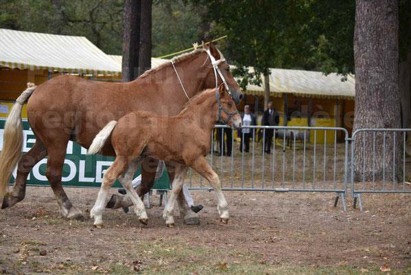 Concours Régional de chevaux de traits en 2017 - Jument & Poulain COMTOIS - ALLIANCE 3 - 27