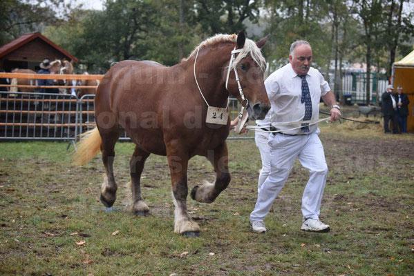 Concours Régional de chevaux de traits en 2017 - Trait COMTOIS - ETOILE DES NAUZETTES - 10