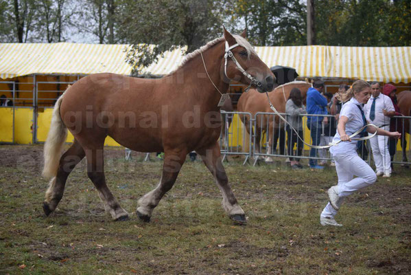 Concours Régional de chevaux de traits en 2017 - Trait COMTOIS - ELITE 14 - 11