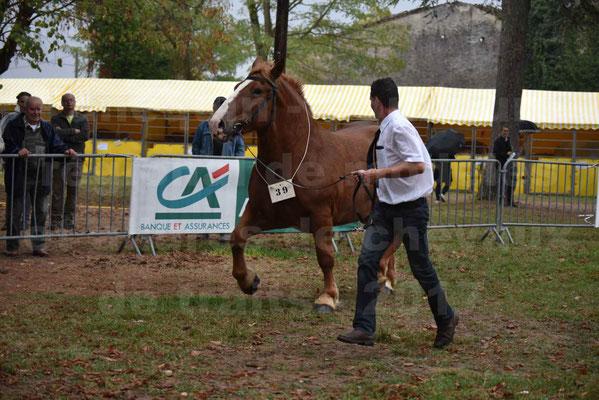 Concours Régional de chevaux de traits en 2017 - Pouliche Trait BRETON - ECLIPSE 53 - 08
