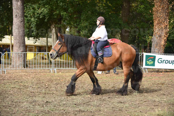 Concours régional de chevaux de traits 2017 - QUIQUINOU - 40