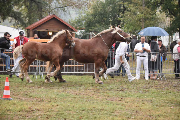 Concours Régional de chevaux de traits en 2017 - Jument & Poulain Trait COMTOIS - CHIPPIE 2 - 02