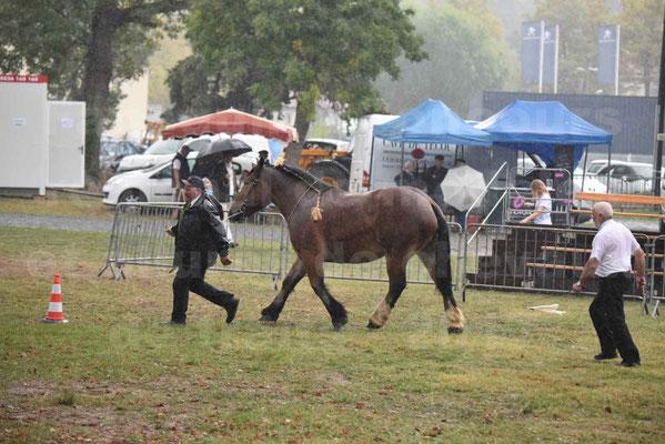 Concours Régional de chevaux de traits en 2017 - Trait BRETON  - EGLANTINE DE BENECHE - 14