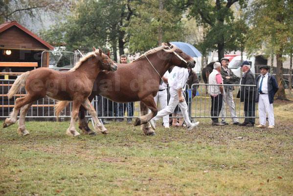 Concours Régional de chevaux de traits en 2017 - Jument & Poulain Trait COMTOIS - CHIPPIE 2 - 03